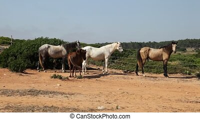 Horses at the farm in Portugal