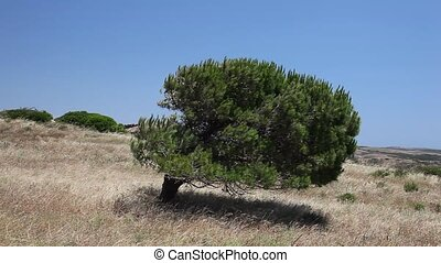 Tree in the Savannah - Tree in the Savannah, Algarve...