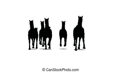 herd of horses runs and runs by, the front view, black silhouette on white background
