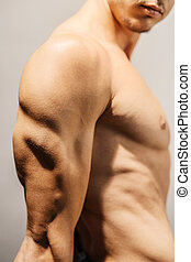 Defined triceps - Closeup of a well defined mans triceps