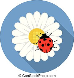 vector red ladybird on a camomile flower
