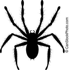 vector black and white drawing of poisonous tarantula spider