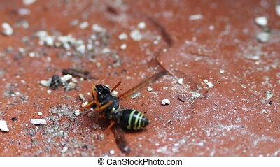 Dying Wasp on the Floor