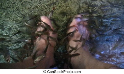 Fish spa - Man having his feet cleaned by Garra rufa aka...