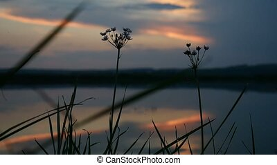 sunset grass silhouette lake water in the background...