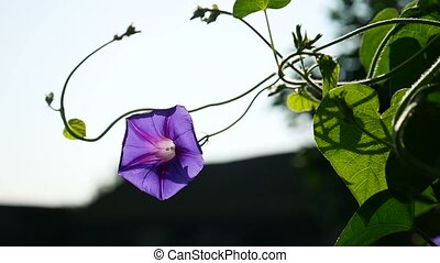 purple flower on a thin stalk of video twine