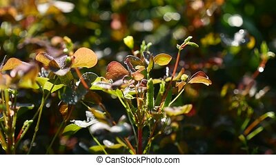 plant with small leaves green - red video - plant with small...