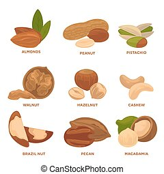 Ripe nuts and seeds vector illustration. Highly detailed nut...