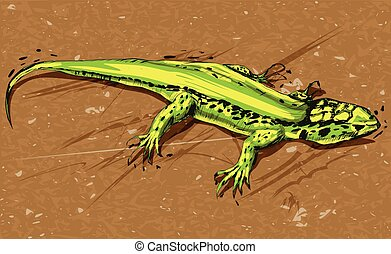 Green lizard, vector illustration on a background.