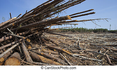 Logging aftermath - Piles of logs after a crew got done in a...