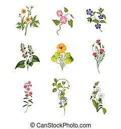 Wild Flowers Hand Drawn Set Of Detailed Illustrations. Herbs...