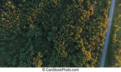 aerial view to forest and car driving on road - travel,...