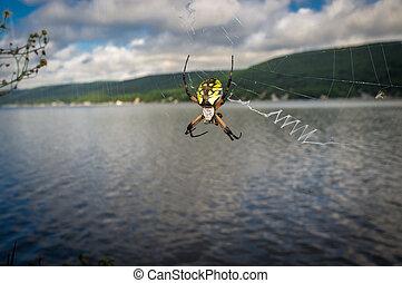 Yellow Garden Spider - Close up yellow garden spider on web...