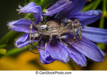 Running Crab Spider Macro - Super macro close up Running...