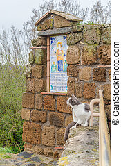 Civita di Bagnoreggio - Cat of Civita di Bagnoreggio, the...