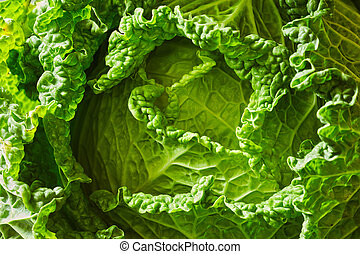 Savoy cabbage head - Green leaves of a fresh raw savoy...