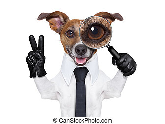 magnifying glass dog - jack russell dog searching and...