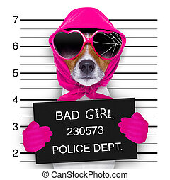 mugshot lady dog - diva lady girl dog posing for a lovely...