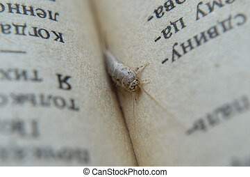 Insect feeding on paper - silverfish. Pest books and...