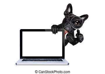 magnifying glass dog - french bulldog dog searching and...