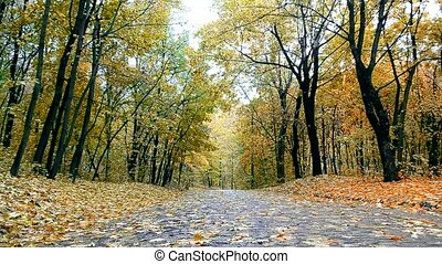 Empty Alley in autumn park with falling leaves - Empty Alley...