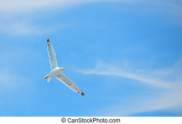 Flying white albatross