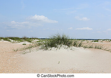 Sand dunes with grasses at the beach