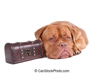 My luggage - Dog ready to go on a trip