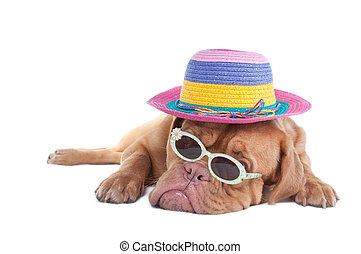 I like it sunny and you - Dog with a summer hat and...
