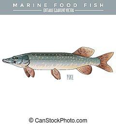 PIke. Marine Food Fish - Pike illustration. Marine food...