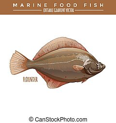 Flounder. Marine Food Fish - Flounder illustration. Marine...