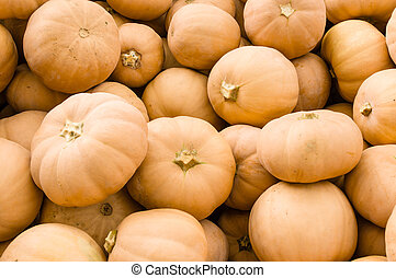 Butter Kin squash on display - Butter Kin fall squash at the...