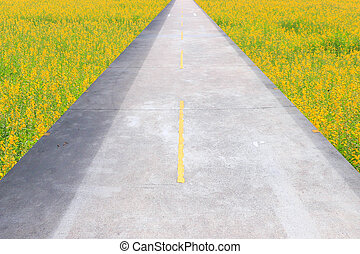 Road on the grassland - Deadlock ,End of the road ,Dead...
