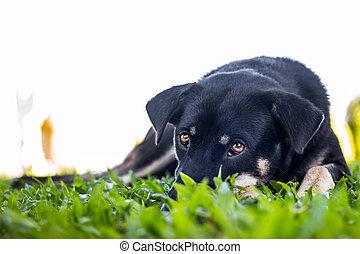 Dog looking camera
