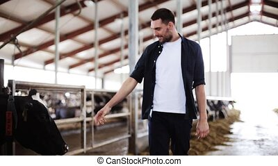 man or farmer with cows in cowshed on dairy farm -...