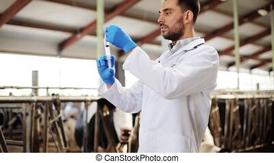 veterinarian with syringe vaccinating cows on farm -...