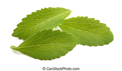 hojas,  stevia