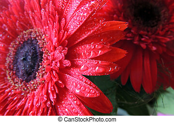 Red Daisy Background - Daisy on wooden background with copy...