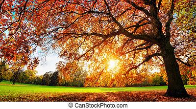Majestic oak tree at autumn sunset - Beautiful oak tree on a...