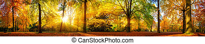Gorgeous forest panorama in autumn - Extra wide panorama of...