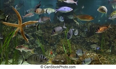 Fish swimming in aquarium - Fish swimming in an aquarium