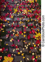 fall brick road