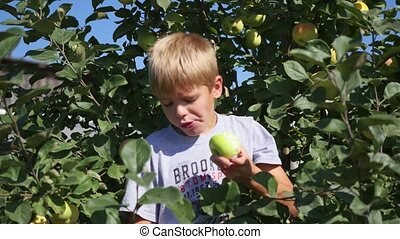 child near Apple tree eating a Apple