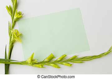 Flowers gladiolus and empty paper sheet on white background...
