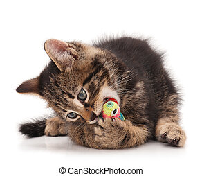 Cute little kitten - Cute kitten with colored toy mouse...