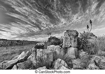 Aloe on mountain rocks landscape sunset with cloudy skies
