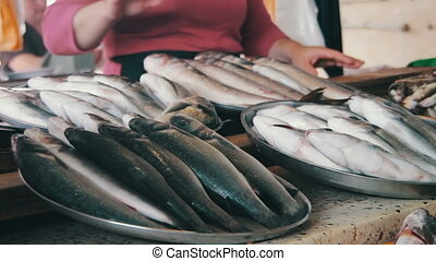 Fresh Fish on the Counter Market