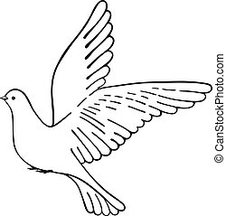 Soaring dove, vector illustration isolated on white...