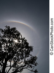 Trees with Sun halo background - Nature Phenomenon, Trees...