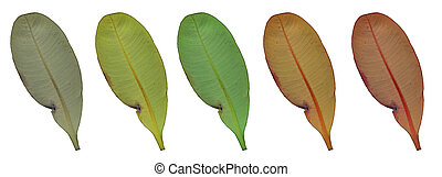 colorful leaf on isolated. - colorful leaf on white...